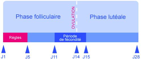 Courbe de température biphasique
