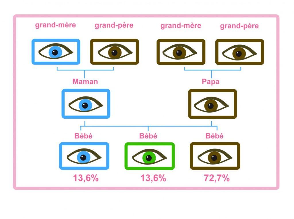 couleur des yeux de votre bébé