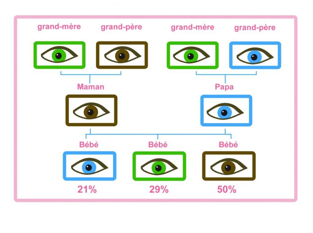 prédire la couleur des yeux de bébé