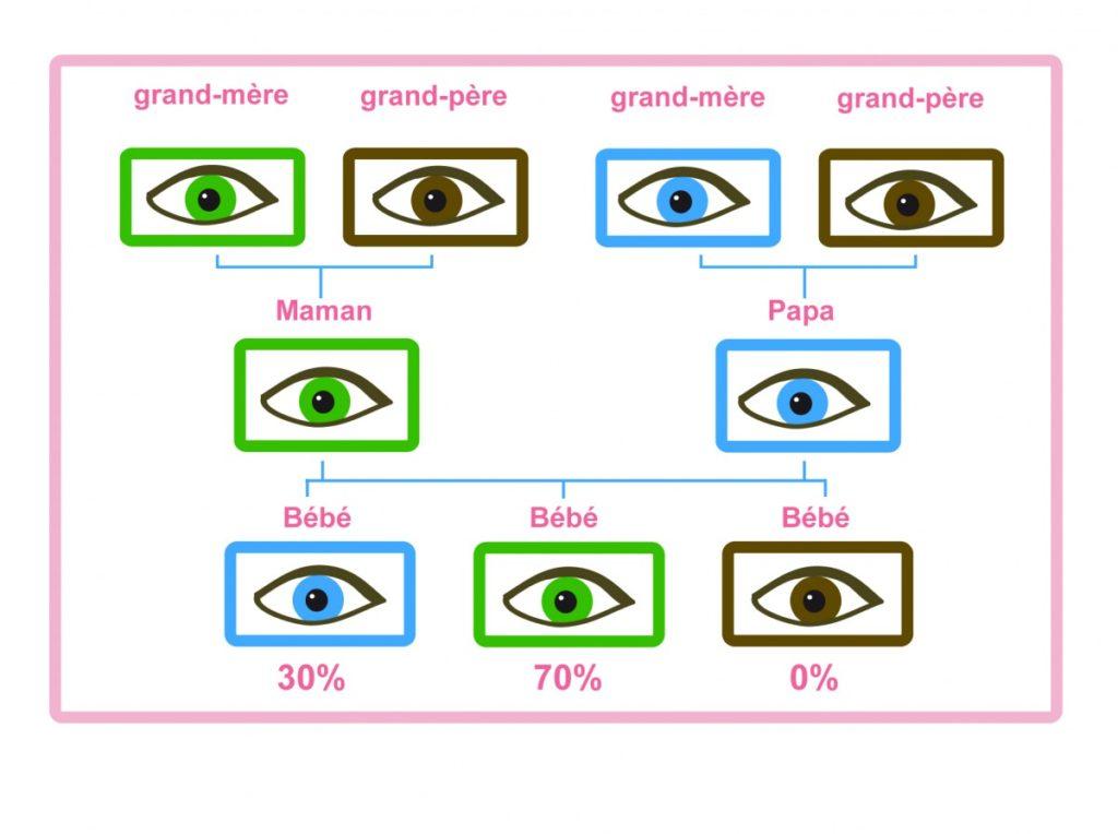 votre bébé aura les yeux verts